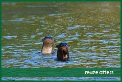 reuze otters